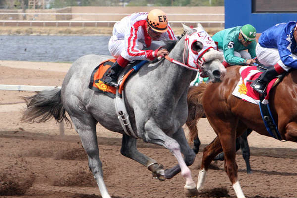 New Mexican Spring Futurity