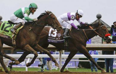 Nyquist winning the Breeders' Cup Juvenile (photo via www.windsorstar.com)