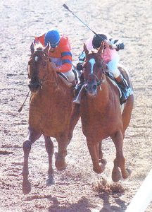 Affirmed winning the Belmont Stakes