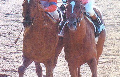 Affirmed (right) won the San Felipe Stakes en route to sweeping the Triple Crown