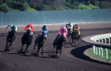 Horses Rounding the Turn