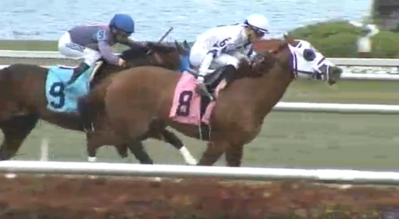 Starship Wildcat (8) catches Doctor J Dub (9) to win a $16,000 starter allowance race at Gulfstream Park on Feb. 19, 2016.