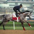 Solow (photo via www.dubairacingclub.com)