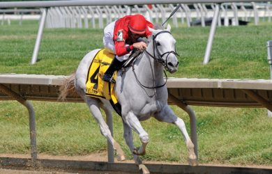 Careless Jewel (photo via www.gainesway.com)