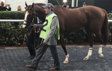 California-Chrome012817a