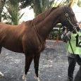 California-Chrome-Pegasus