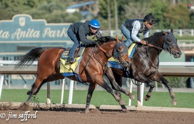 Hoppertunity and Mor Spirit stretch their legs at Santa Anita Park on Jan. 30. On Saturday, they will face each other again — in the San Antonio Stakes (photo by Jim Safford).