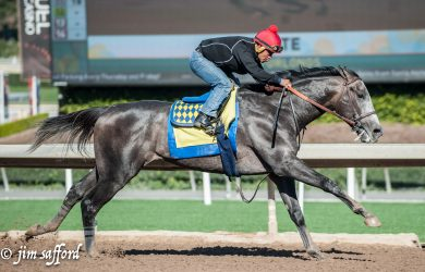 Arrogate drills a mile in 1:38-2/5 in preparation for his next start (photo by Jim Safford).