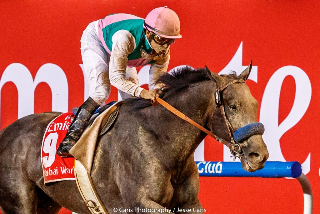 Despite a troubled start, Arrogate stormed home to win the Dubai World Cup at Meydan Racecourse on Saturday (photo by Jesse Caris).