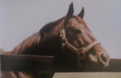 Seattle-Slew_Wes-Lanter
