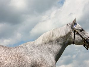 Holy Bull Horse