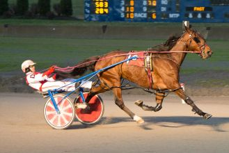 Buffalo-Raceway-Horse