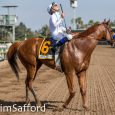Justify_Jim-Safford4