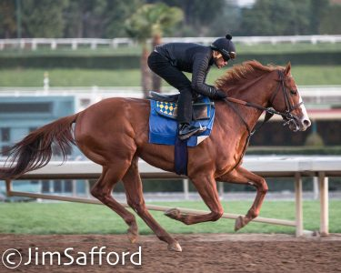 "Justify and exercise rider Humberto ""Beto"" Gomes on February 4, 2018. Photo: Jim Safford"