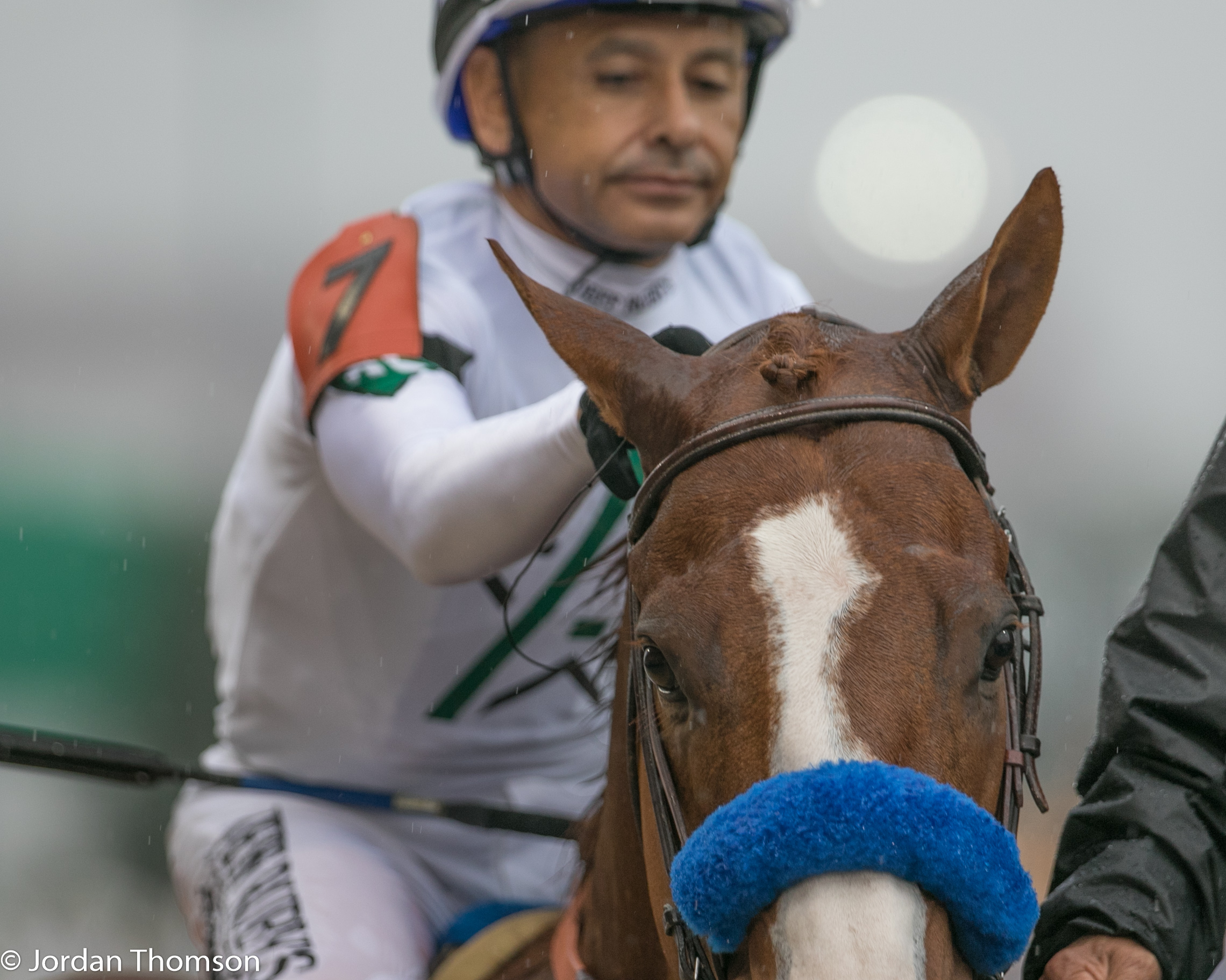 Pedigree Handicapping What To Look For And Why Daily