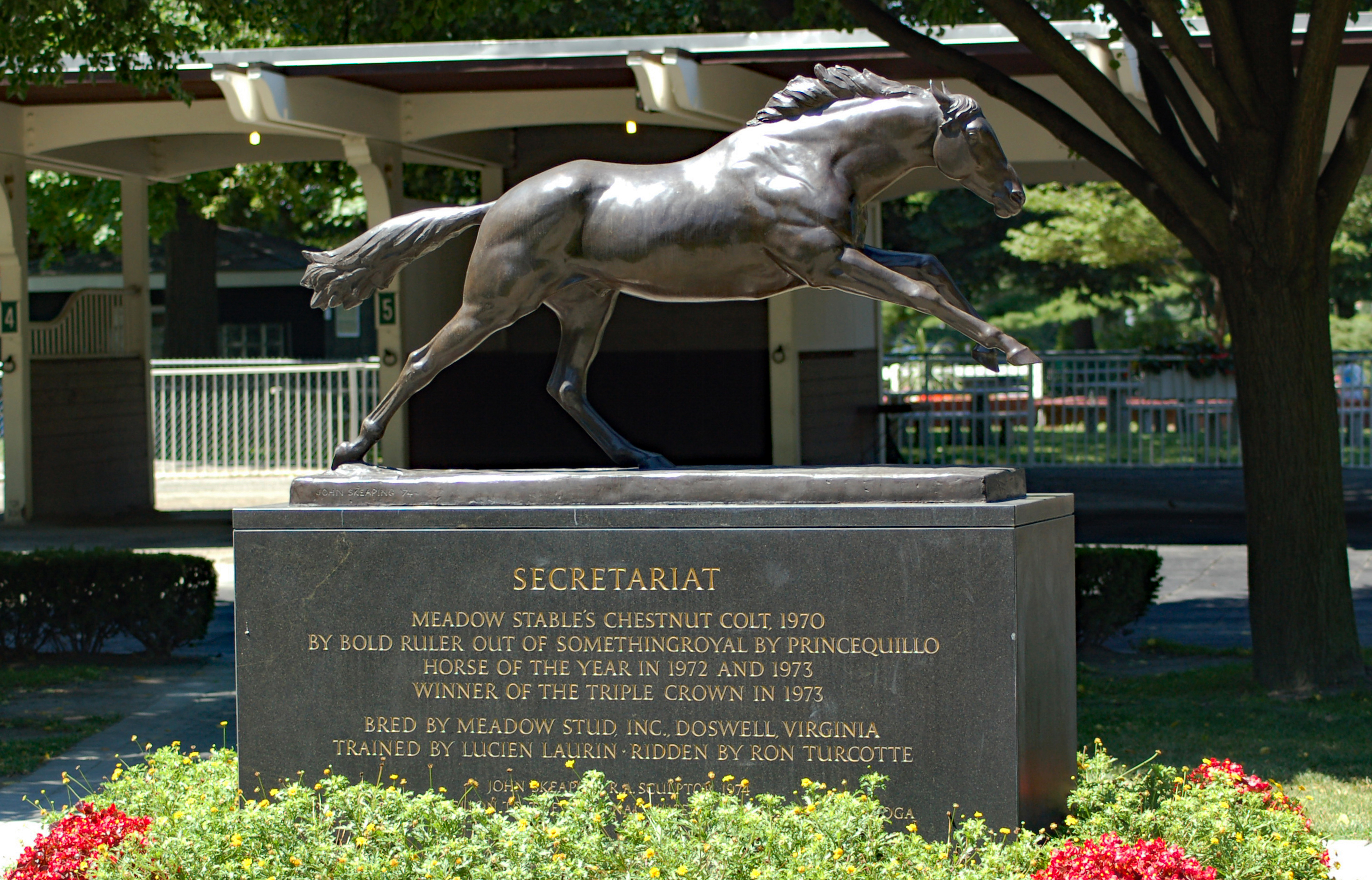 The Secretariat statue resides adjacent to the White Pine in Belmont's paddockJPG