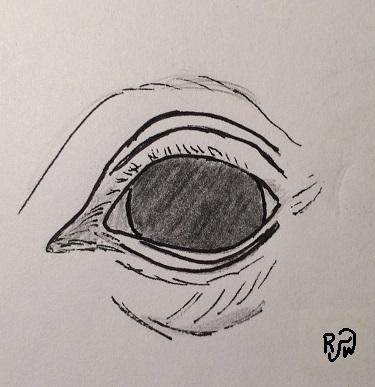 Round-Eye-RW