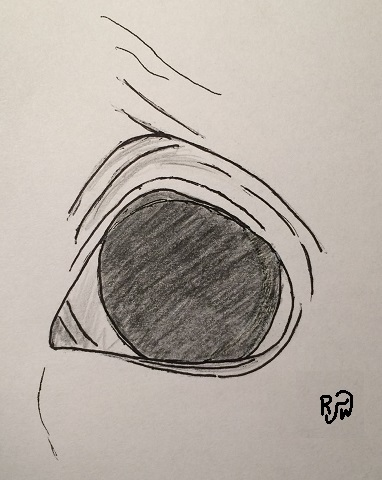 Triangular-Eye-RW