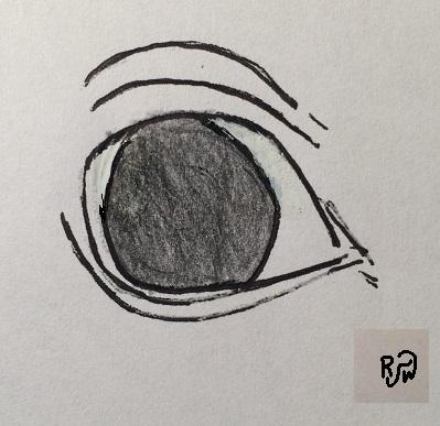 White-Eye-RW