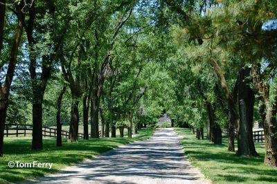 003-Allaire du Pont once rode Kelso along the trails of Woodstock.
