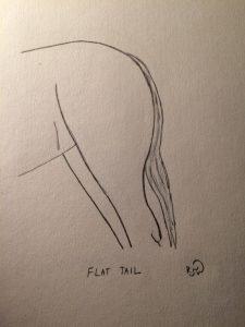 Flat-Tail