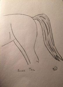 Raised-Tail
