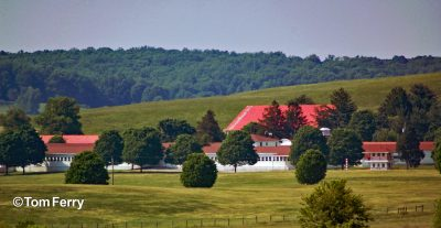 002-The unmistakable landscape of Sagamore Farm