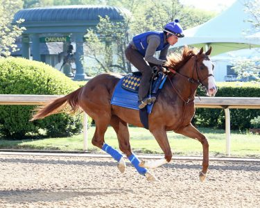improbable-op-gallop-041018-002