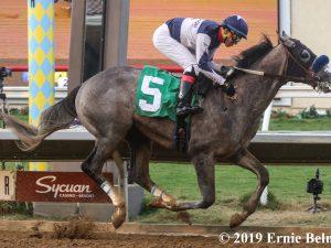American Thoerem Horse