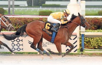 Diamond Oops - Photo courtesy of Coolmore.com