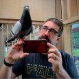 Pigeon - Photo courtesy of David Stephenson