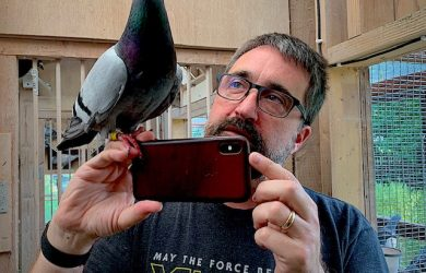 Pigeon - Photo courtesy of David Stephenson