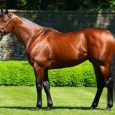 American Pharoah - Photo courtesy of Coolmore.com