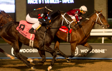 Halo Again - Photo Courtesy of Woodbine Racetrack/ Michael Burns Photo