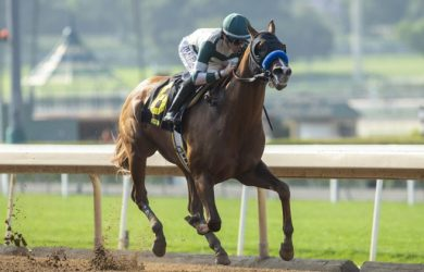 Mucho Gusto - Photo Courtesy of Santa Anita Park