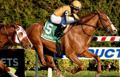 Curlin's Honor horse