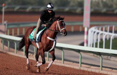 Maximum Security - Courtesy of Laura Green / Jockey Club of Saudi Arabia