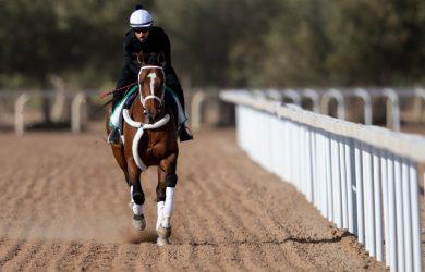 Saudi Cup Betting Odds Maximum Security: Horse Racing Profile