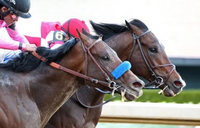 Omaha Beach - Photo courtesy of Oaklawn Park