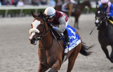 Florida Derby Betting Odds: Preview and Field of 12