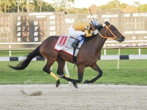 king guillermo-TampaBayDerby