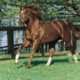 Secretariat - Photo credit: Claiborne Farm photo