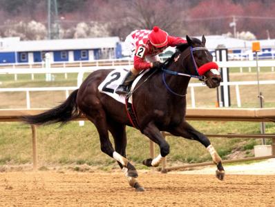 Lebda - Courtesy of Maryland Jockey Club