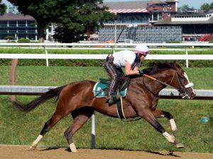 Tiz the Law at Saratoga