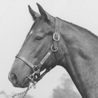 Spectacular Bid - Photo Courtesy of Keeneland