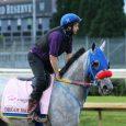 Dream Marie Horse