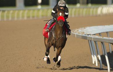 Clayton - Courtesy of Woodbine Racetrack/Michael Burns Photo.