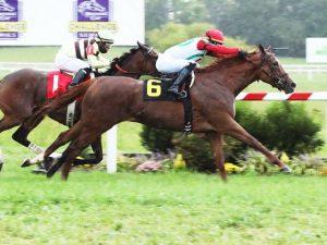 Regal Glory Horse Kentucky Downs