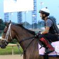 Shedaresthedevil - Horse