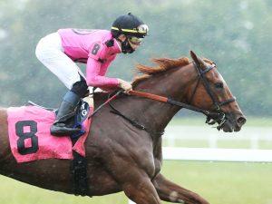 Got Stormy Horse Kentucky Downs